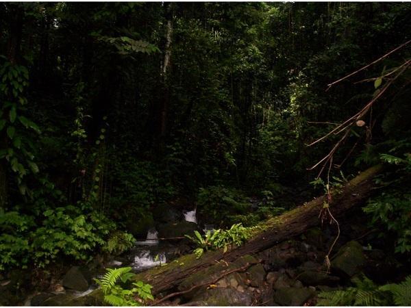20 -25 тысяч видов растений