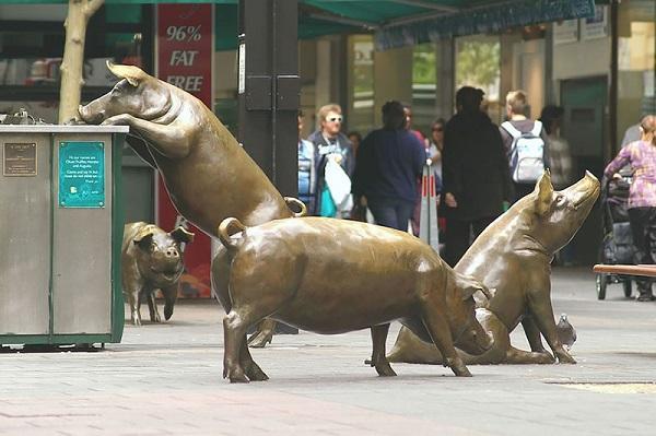 Свиньи, Австралия