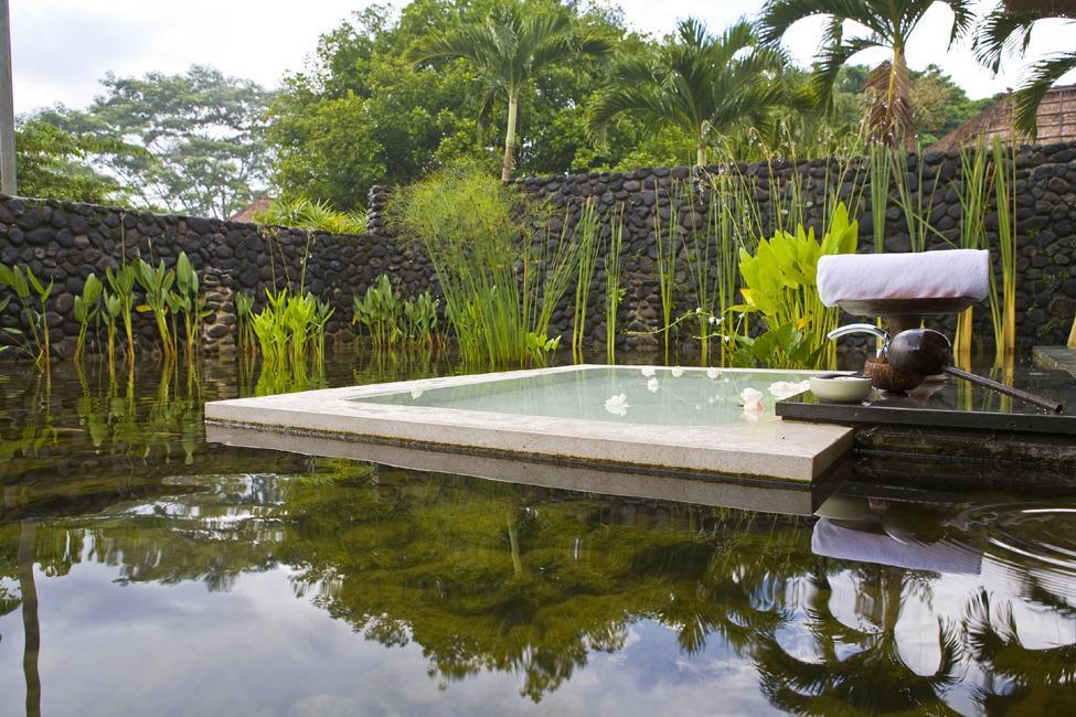 в джунглях Бали