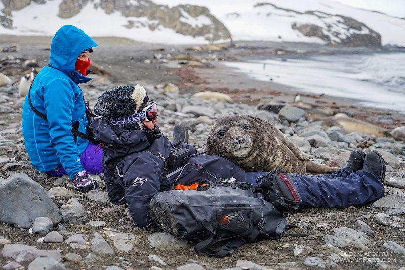Виртуальное путешествие по Антарктиде