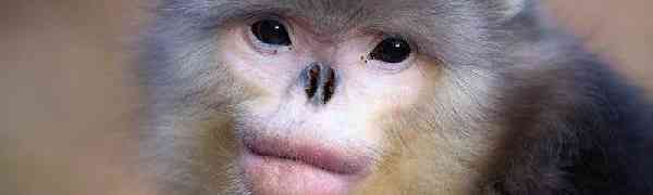 Животные, о существовании которых, возможно, вы не знали