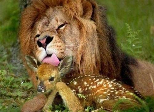 любовь животных