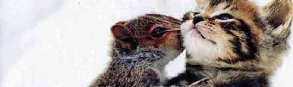 Любовь этих животных ломает все стереотипы!