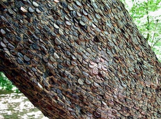 Денежные деревья в Великобритании