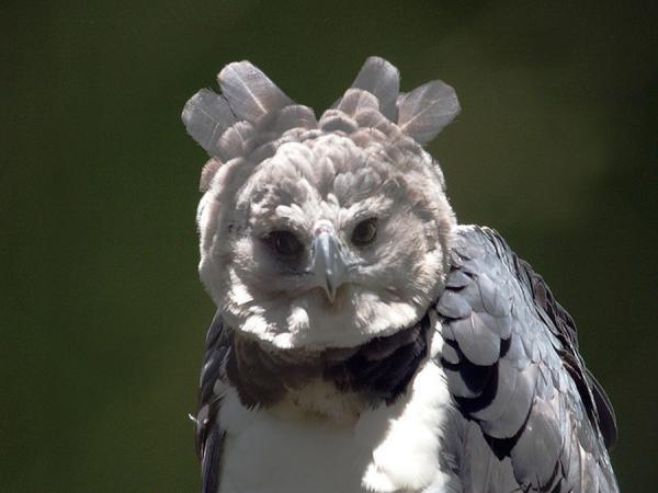 Необыкновенные птицы